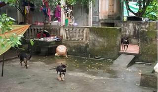 Rùng mình lời kể về đàn chó hung dữ cắn bé trai tử vong ở Hưng Yên