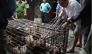 Đã bắt đàn chó cắn bé trai tử vong ở Hưng Yên về công an huyện