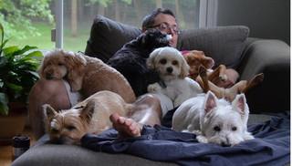 Không chỉ bệnh dại, những căn bệnh nguy hiểm này có thể lây từ chó sang người