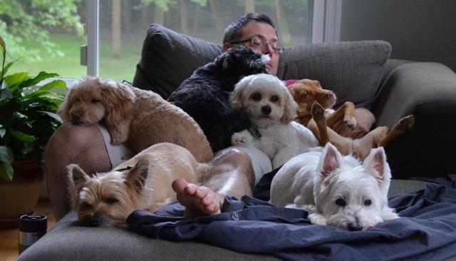 Ngoài bệnh dại, bạn có thể lây những căn bệnh nguy hiểm nào từ chó?