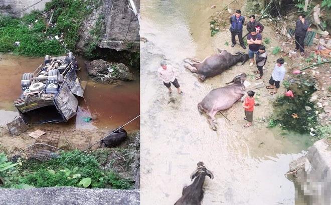 Hà Giang: Xe tải chở trâu lao xuống suối, tài xế may mắn thoát nạn