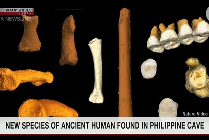 hóa thạch xương của loài giống người vừa được các nhà khoa học tìm thấy ở Philippines