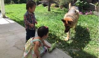 Tin tức thời sự 24h ngày 14/4: Chó là thú cưng hay hung thần?