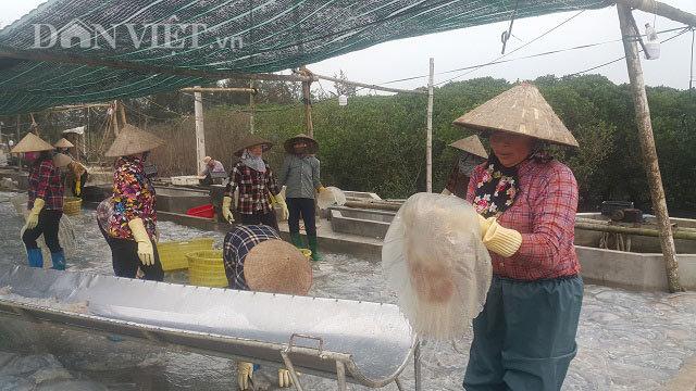 Nam Định: Săn vàng trắng nổi lập lờ ven bờ biển, kiếm chục triệu/ngày