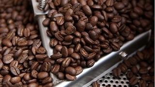 Giá cà phê hôm nay 18/10: Đà giảm vẫn chưa dừng lại