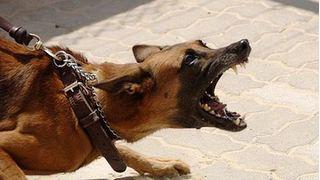 Thanh Hóa: Bé trai bị chó nhà cắn mất cả 2 tai, nguy kịch