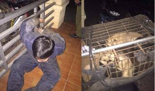 Công an vây bắt nhóm 'cẩu tặc' dùng súng điện trộm chó trong đêm