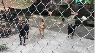 Tình tiết mới nhất vụ án bé trai 7 tuổi bị đàn chó cắn chết ở Hưng Yên