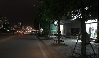 Vì sao hàng trăm cây sấu ở Hà Nội bị chuyển đi trong đêm?