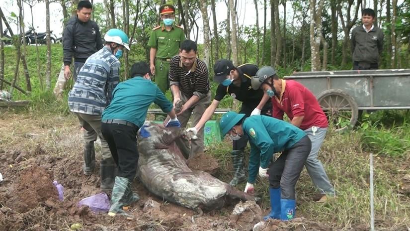 Dịch tả lợn châu Phi hoành hành tại 29 tỉnh thành, đề xuất đông đá thịt lợn để dân ăn dần