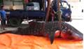 Tiết lộ bất ngờ về con cá được người dân xẻ thịt ở Thanh Hoá