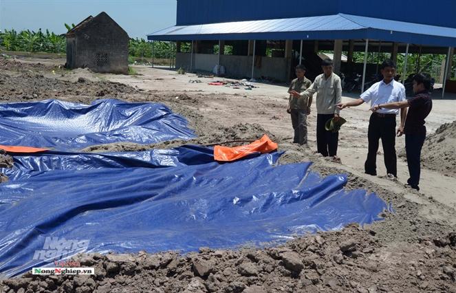 Nam Định: Bàn chuyện mua đất chôn lợn