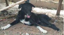 Chú chó được ca ngợi là 'người hùng' vì cứu sống bé sơ sinh bị mẹ chôn sống