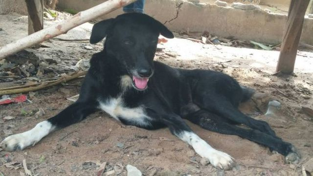 Chú chó què được ca ngợi vì cứu sống bé sơ sinh bị mẹ chôn sống