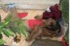 Một cụ ông ở Hà Nội tử vong trước cửa nhà dân, nghi do bị sốc nhiệt