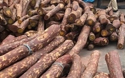 Bắt 12 tấn gỗ quý có giá hàng chục tỷ nhập về cảng Hải Phòng