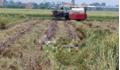 Đi gặt lúa, tá hỏa phát hiện thi thể đang phân huỷ mạnh dưới ruộng
