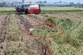 Đã xác định được danh tính người đàn ông tử vong dưới ruộng lúa ở Nam Định