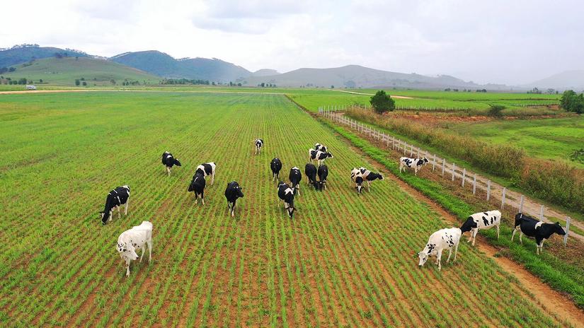 Vinamilk Liên doanh với doanh nghiệp Lào và Nhật Bản khởi công xây dựng tổ hợp 'resort' bò sữa Organic quy mô 5.000ha tại Lào