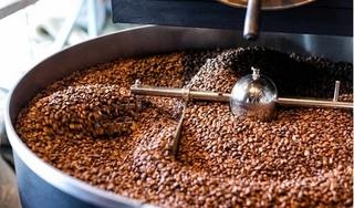 Giá cà phê hôm nay 27/1: Đi ngang, dao động trong khoảng 31.100 – 31