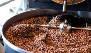 Giá cà phê hôm nay 9/6: Giữ nguyên giá so với hôm qua