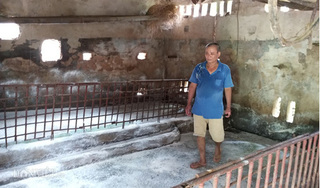 Ninh Bình: Lợn chết la liệt sau khi công bố hết dịch, chuồng xơ xác