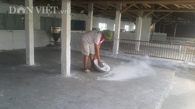 Nam Định: Dịch tả lợn châu Phi càn quét, 10 phần chết 9, dân phá sản