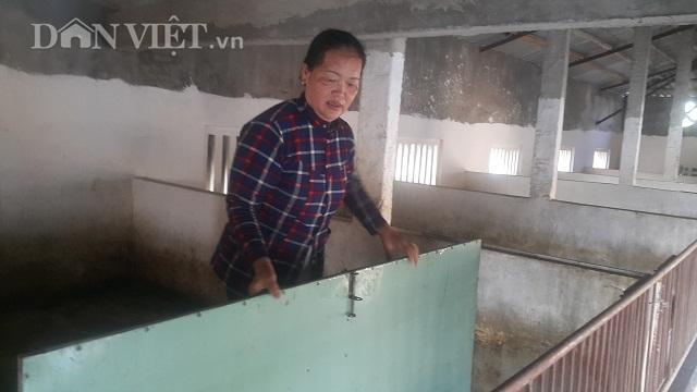 Nam Định: Dịch tả lợn châu Phi càn quét, 10 phần chết 9, dân phá sản4
