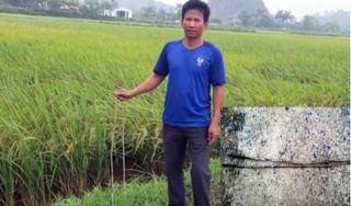 Ninh Bình: Kẻ xấu đặt 'bẫy' sắt dưới ruộng khiến máy gặt hư hỏng nặng