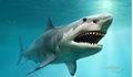 Bí ẩn cá mập không có xương chính thức có lời giải