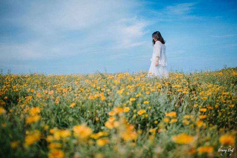 Kinh nghiệm du lịch ngắm hoa cúc biển 'siêu đẹp' ở Cửa Lò