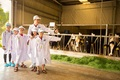 Tận mắt thấy những cô bò ở 'Resort' góp công vào ly sữa học đường