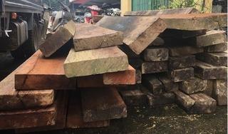 Bắc Kạn: Phát hiện 41 cây gỗ nghiến bị chặt hạ