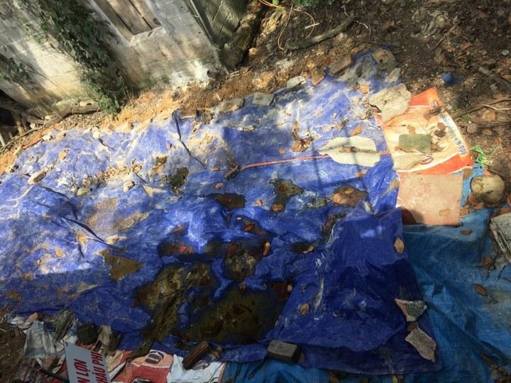 Hơn 6 tấn lợn mắc dịch tả lợn Châu Phi được chôn lấp ngay trong khu dân cư