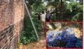 Cán bộ xã chỉ đạo chôn 80 con lợn mắc dịch tả châu Phi trong khu dân cư