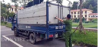 ĐIỀU TRA: Ai tiếp tay để 38 con lợn dịch tả vượt 300km vào Lạng Sơn