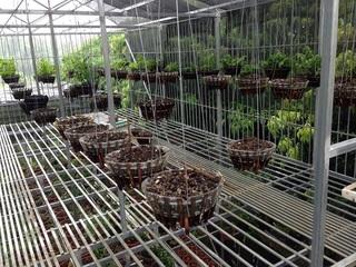 Vườn lan gần 2 tỷ ở Phú Thọ bị trộm 'khoắng' sạch sau 1 đêm