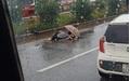 Băng qua đường cao tốc, nữ công nhân bị xe tải tông tử vong