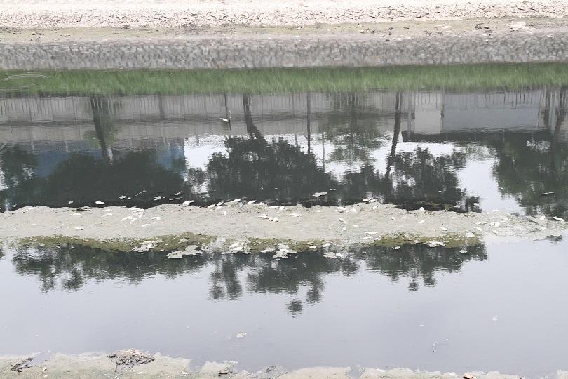 Dừng nhận nước Hồ Tây, sông Tô Lịch lại đen kịt, cá chết khắp mặt sông
