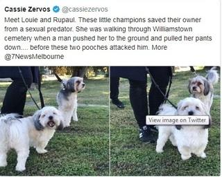 Một phụ nữ thoát khỏi 'yêu râu xanh' nhờ 2 chú chó nhỏ dũng cảm
