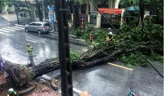 Hàng loạt cây cối ở Hà Nội, Hải Phòng, Quảng Ninh gãy đổ sau bão số 3