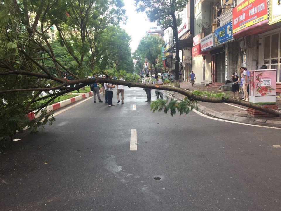 Người đàn ông đâm vào cây đổ ngang đường dẫn đến tử vong