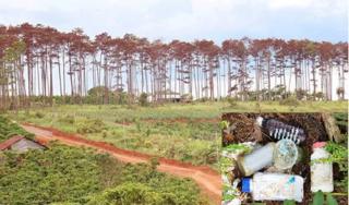 Cán bộ ngân hàng thuê người hủy hoại gần 6.500 m2 rừng thông để chiếm đất