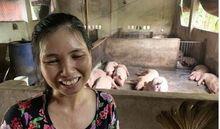 15 con lợn mắc dịch tả lợn châu Phi bất ngờ 'khỏi bệnh' sau khi ăn bã rượu?