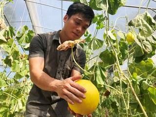 Bất ngờ Ngọc Phụng: Làng rõ đẹp, ruộng đầy quả vàng thơm