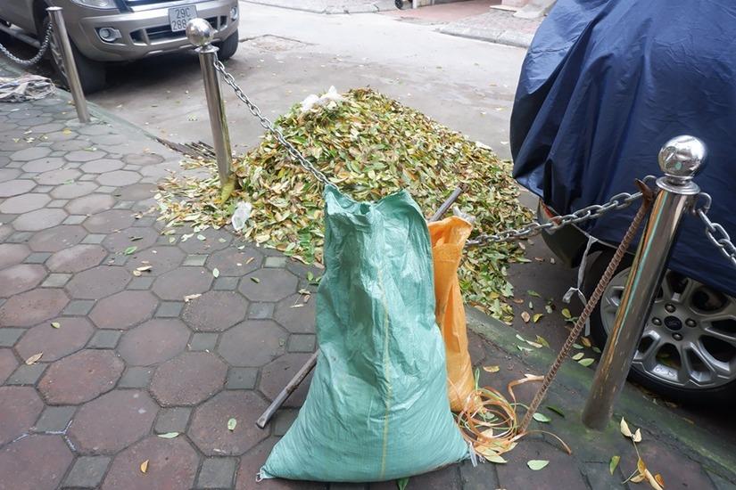 Hàng cây sưa rụng lá bất thường nghi bị kẻ xấu đầu độc9