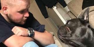 Chủ qua đời vì ung thư, chó cưng cũng chết đột ngột theo sau ít phút