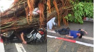 Hà Nội: Giông lốc khiến cây đổ đè nam thanh niên tử vong