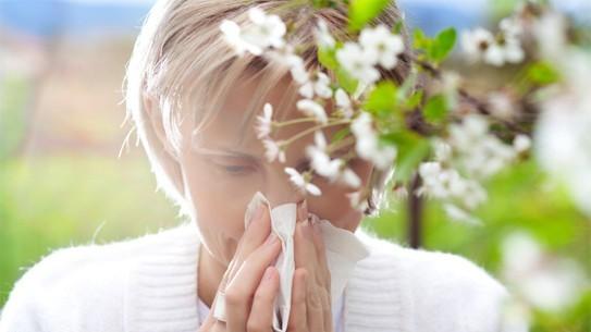 Viêm mũi dị ứng theo chu kỳ vào mùa xuân khi có nhiều phấn hoa bay trong không khí