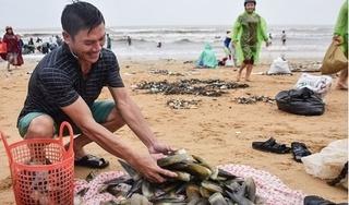 Sau lũ, hàng trăm người dân đổ xô ra biển vớt sò mai kiếm gần 10 triệu đồng/ngày
